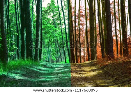 summer green forest is transformed into an orange autumn beauty of wildlife pure and no one around the magic of our world #1117660895