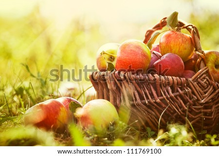 Organic apples in basket in summer grass. Fresh apples in nature #111769100