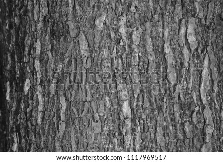 Bark texture for background #1117969517