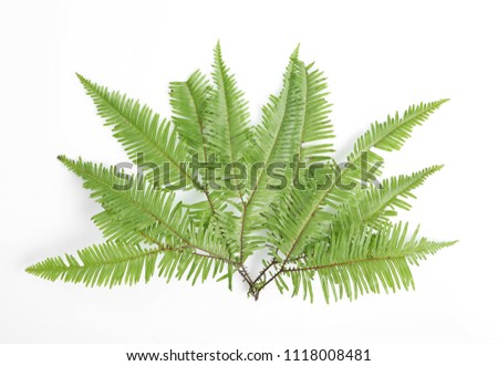 Beautiful tropical fern leaf on white background #1118008481