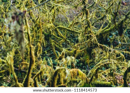 Green mossy trees in a forest #1118414573