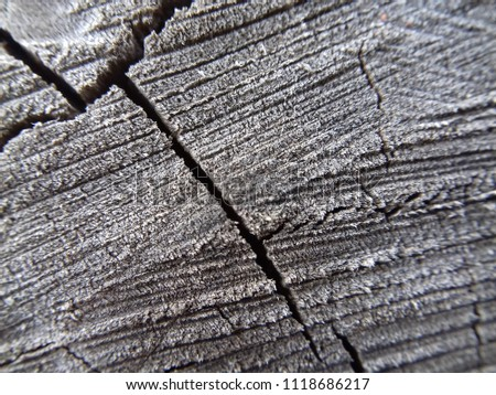cracked stump macro photo #1118686217