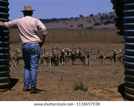 Drought in Australia Farmer trying to save starving sheep - NSW - Australia #1118697938