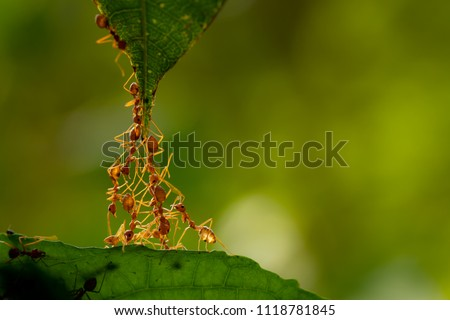 Ant action standing.Ant bridge unity team,Concept team work together Royalty-Free Stock Photo #1118781845