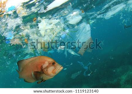 Fish and plastic pollution in sea. Microplastics contaminate seafood.    #1119123140