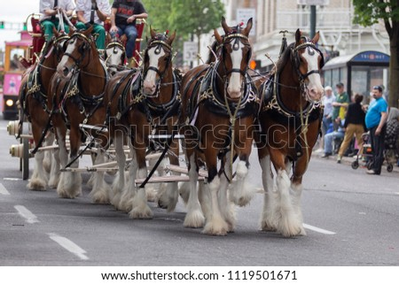 Portland, OR / USA - June 11 2016: Grand floral parade. Carrion carriage with horses walking down the street. #1119501671