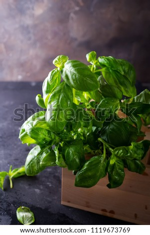Green fresh basil on stone background #1119673769