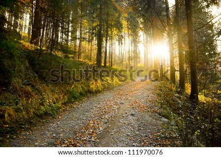 Beautiful autumn forest mountain path at sunset Royalty-Free Stock Photo #111970076