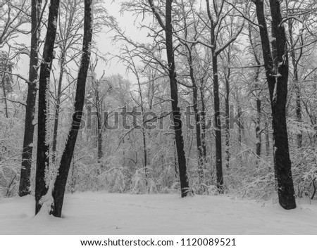 Winter period. Trees in the forest or in the park are under a lot of snow. Consequences of heavy snow. Winter landscape. #1120089521