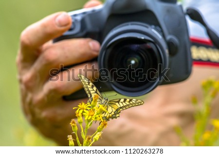 Beautiful Swallowtail butterfly on yellow flower macro photography by wildlife photographer from short distance