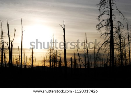 Spooky landscape of a dark tree silhouette and a sunset #1120319426