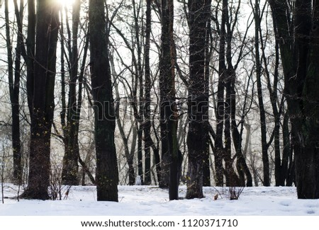 Soft sunlight in forest. Abstract nature background. #1120371710