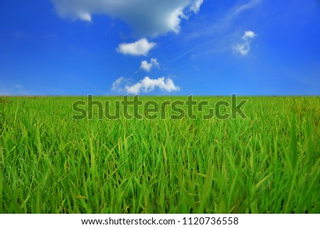 green lawn and blue sky background, landscape with green fresh meadow with clear blue sky and white clouds #1120736558