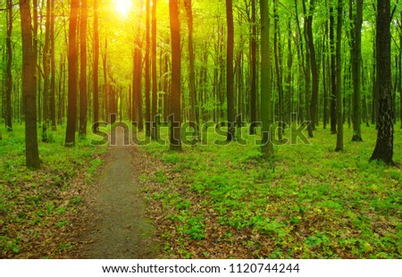 Sun beam in a green forest #1120744244