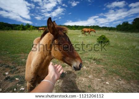 Wild horses walking in the walley #1121206112