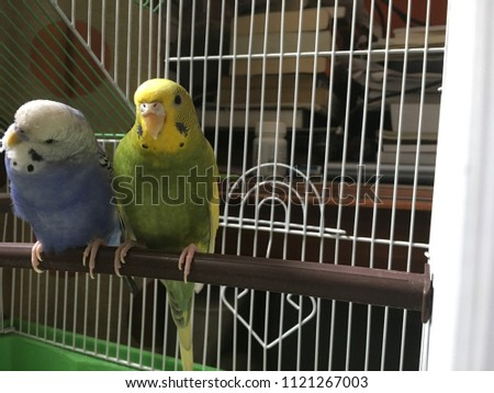 2 caged birds just looking for a hand to free them up from captivity #1121267003