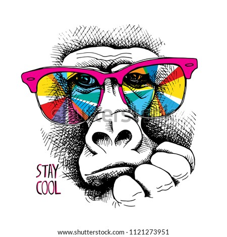 Vector illustration. Portrait of Monkey in a rainbow color glasses. Stay cool - lettering quote. Poster, t-shirt composition, hand drawn style print.