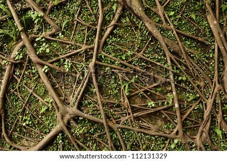 tree root #112131329