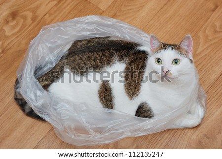 Amazing lady-cat lying in the plastic bag on the floor #112135247
