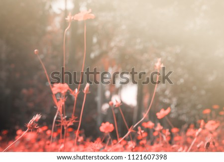 Beautiful vintage cosmos flowers with bee background. #1121607398