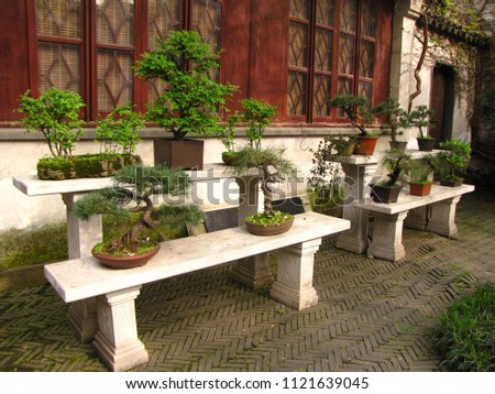 Green dwarf bonsai trees in the garden in China in the spring                       #1121639045
