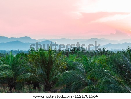 Tropical background of palm trees against mountain and twilight sky. #1121701664