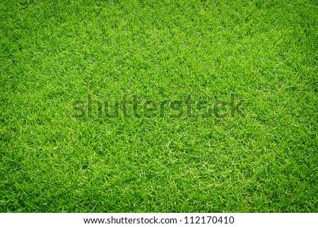 green grass #112170410