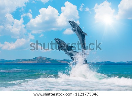 Group of dolphins jumping on the water - Beautiful seascape and blue sky #1121773346