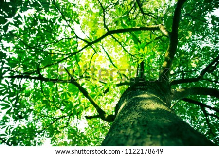 green tree leaves background.Big tree with sunlight #1122178649