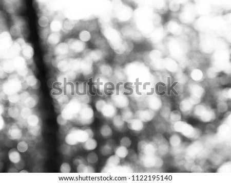 Leaf bokeh in the forest, missed focus, Black and white photo #1122195140