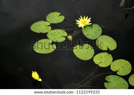 Beautiful water lily #1122199235