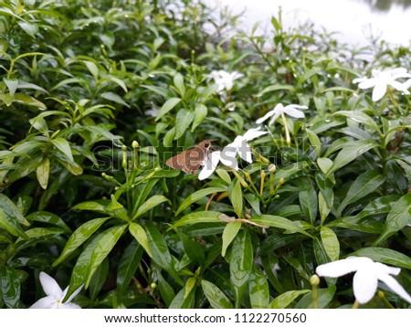 Flowers in the garden #1122270560