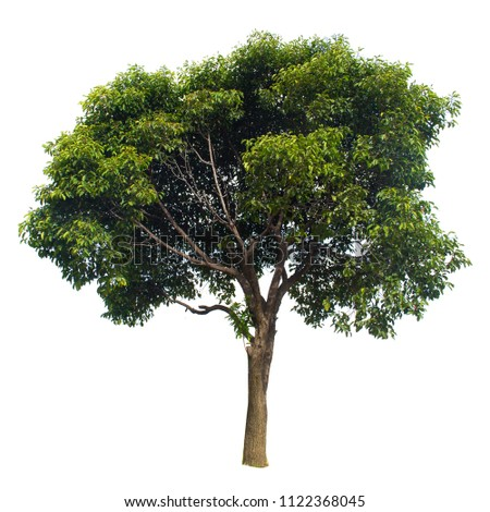 isolated tree on white with clipping path #1122368045