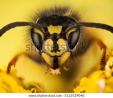 Common Wasp, Wasp, Vespula vulgaris #1122529040