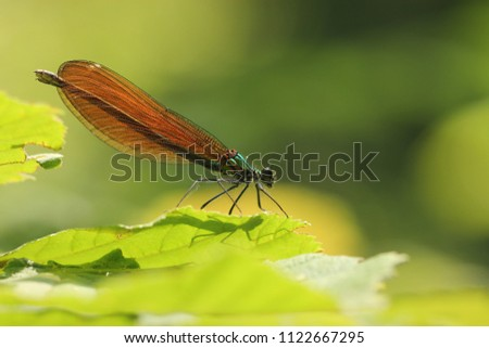 A dragonfly on a leaf in a forest.