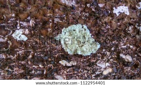 Type of lichens on the wood in rain forest #1122954401