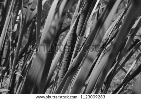 Black and white reeds in the city #1123009283