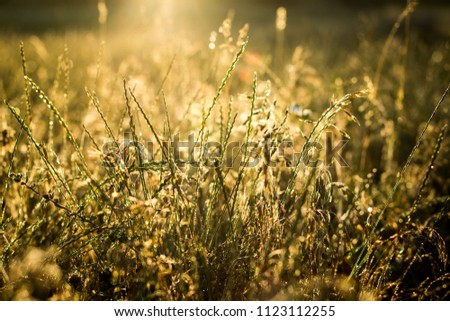 background light grass sunlight summer plant #1123112255