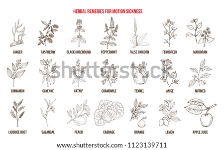 Best herbal remedies for motion sickness. Hand drawn vector set of medicinal plants #1123139711