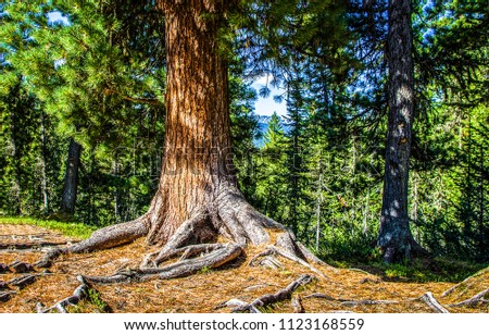 Forest tree roots scene. Big pine tree in pine forest scene. Pine tree roots close up #1123168559