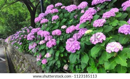 garden of hydrangea #1123185113