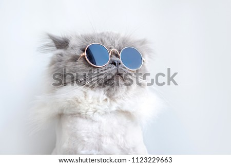 funny cat posing in sunglasses Royalty-Free Stock Photo #1123229663