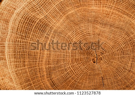 Old wooden oak tree cut surface. Detailed warm dark brown and orange tones of a felled tree trunk or stump. Rough organic texture of tree rings with close up of end grain. #1123527878