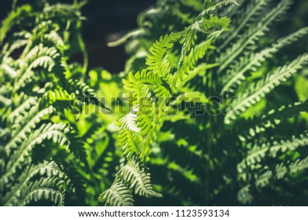 Natural leafs of fern with sunlight in tropical forest. Close up. Nature background. #1123593134