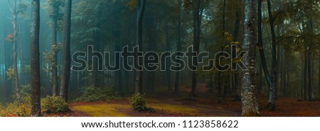 Panorama of foggy forest. Fairy tale spooky looking woods in a misty day. Cold foggy morning in horror forest #1123858622