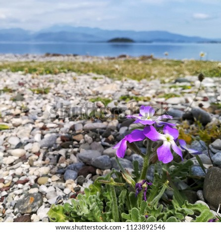 a purple flower at the beach #1123892546