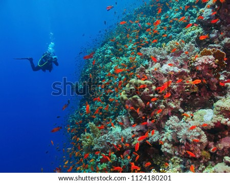 Scuba diver photographer on the underwater coral reef. Underwater photographer diving with corals and red fish. Reef, blue water and diver with camera. #1124180201