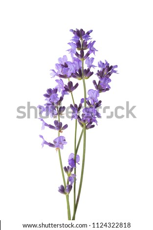 Few sprigs of lavender isolated on white background. #1124322818