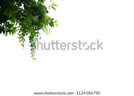 Green leaves tree on isolated background make for frame  product concept. #1124386790