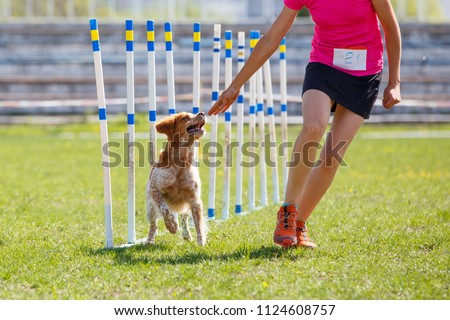 Brittany dog with handler girl at the weave poles in agility competition. Royalty-Free Stock Photo #1124608757